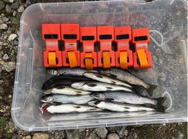 Bilde av 6 pkn. Autosett small - Perfekt til ørretfiske